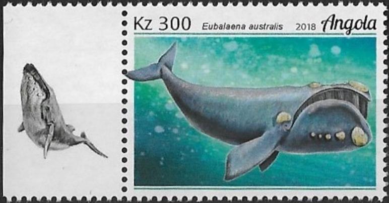 Angola 2018 Wildlife of Angola - Whales c.jpg