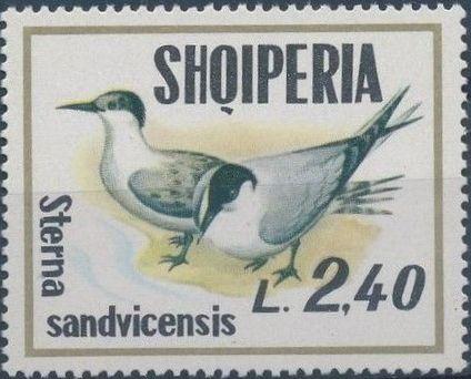 Albania 1973 Sea Birds g.jpg