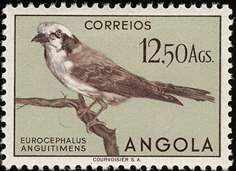 Angola 1951 Birds from Angola r.jpg