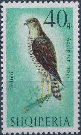 Albania 1966 Birds of Prey e.jpg