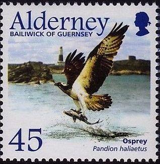 Alderney 2002 Migrating Birds Part 1 Raptors e.jpg