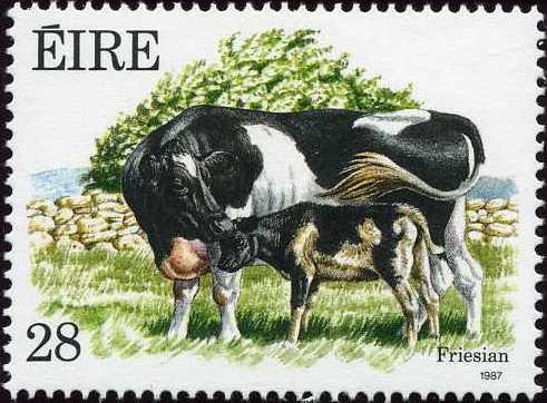 Ireland 1987 Irish Cattle b.jpg