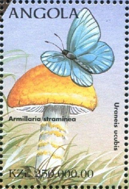 Angola 1998 Butterflies (1st Group) g.jpg