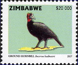 Zimbabwe 2007 Birds from Zimbabwe h.jpg