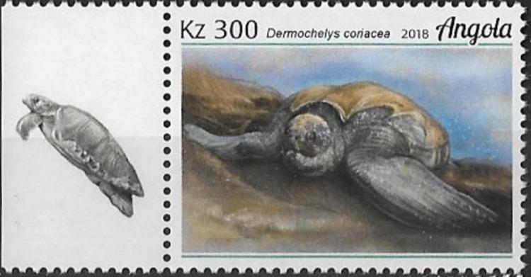 Angola 2018 Wildlife of Angola - Turtles c.jpg