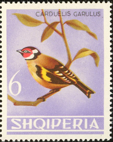 Albania 1964 Birds h.jpg