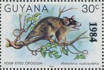 Guyana 1984 Wildlife (Overprinted 1984) k.jpg