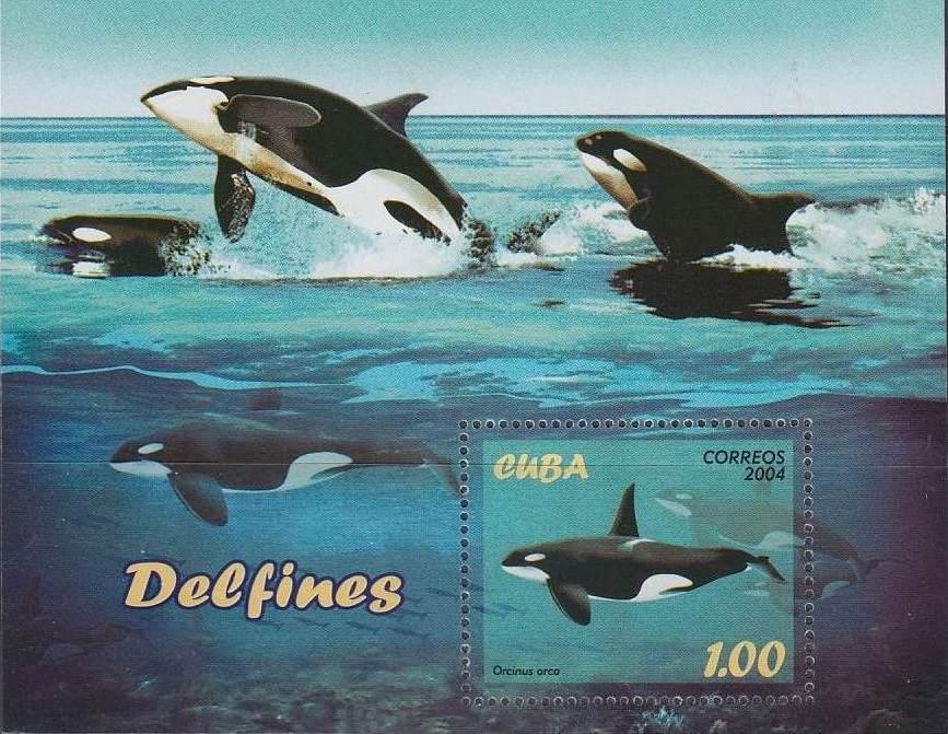 Cuba 2004 Marine Mammals SSa.jpg