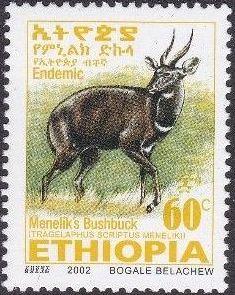 Ethiopia 2002 Menelik's Bushbuck l.jpg