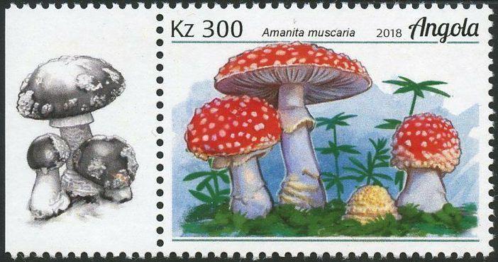 Angola 2018 Wildlife of Angola - Mushrooms d.jpg