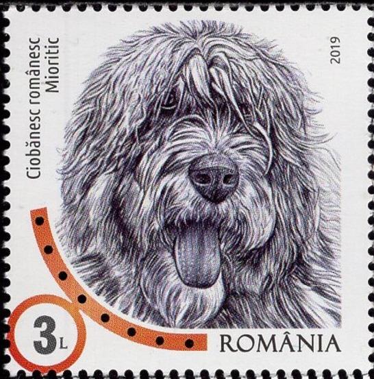 Romania 2019 Romanian Dog Breeds
