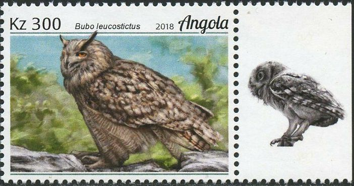 Angola 2018 Wildlife of Angola - Owls c.jpg