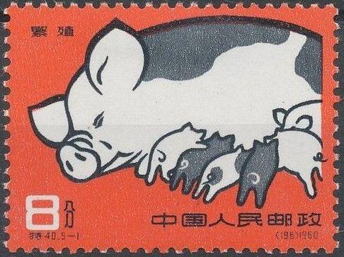 China (People's Republic) 1960 Pig-breeding