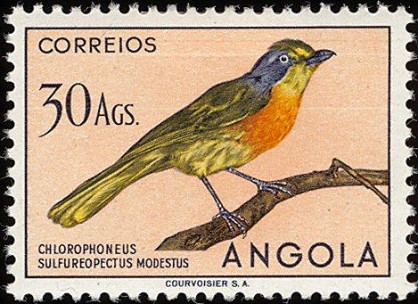 Angola 1951 Birds from Angola v.jpg