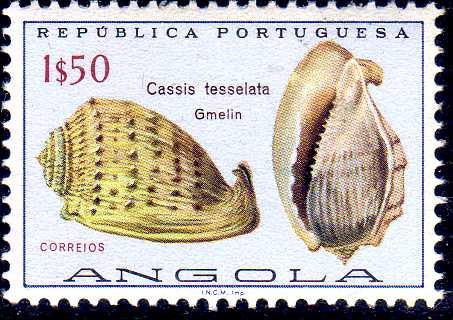 Angola 1974 Sea Shells f.jpg