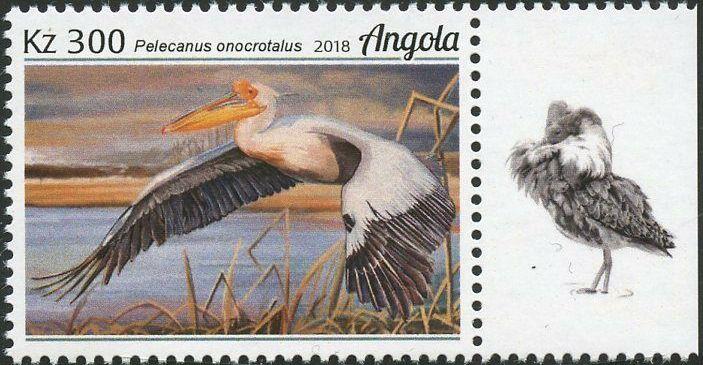 Angola 2018 Wildlife of Angola - Water Birds c.jpg