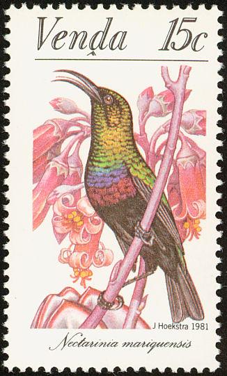 Venda 1981Sunbirds b.jpg