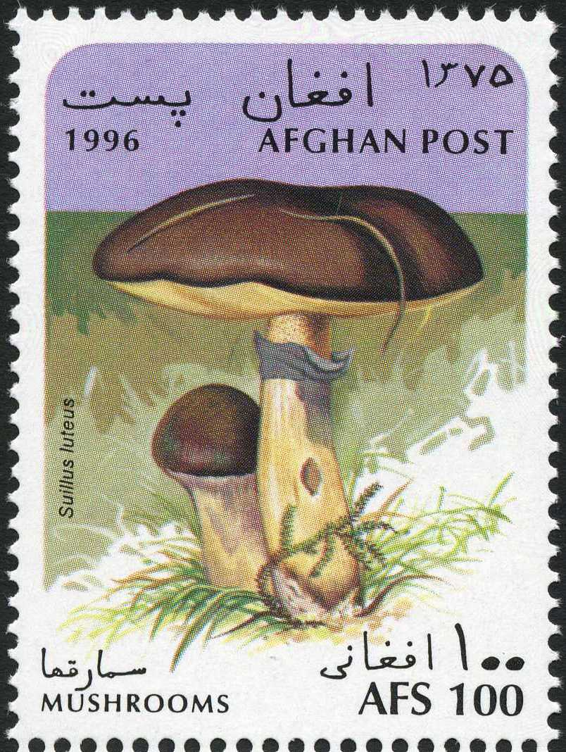 Afghanistan 1996 Mushrooms a.jpg
