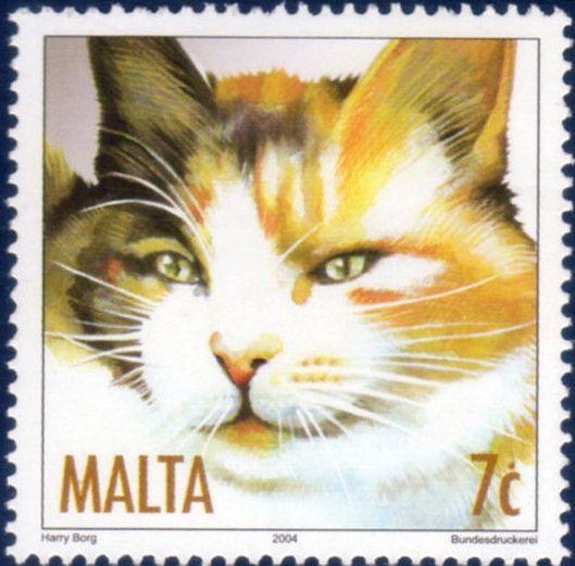 Malta 2004 Cats