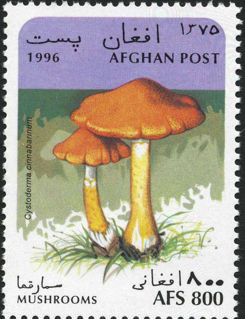 Afghanistan 1996 Mushrooms e.jpg