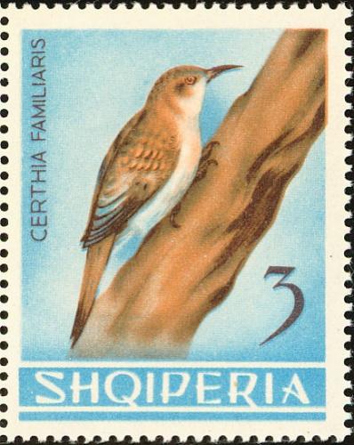 Albania 1964 Birds e.jpg