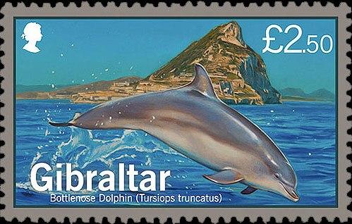 Gibraltar 2014 Dolphins c.jpg