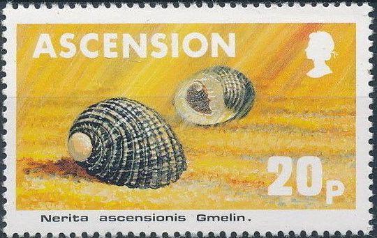 Ascension 1983 Sea Shells d.jpg