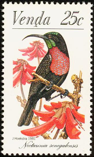 Venda 1981Sunbirds d.jpg