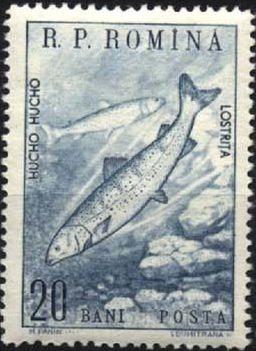Romania 1960 Romanian fauna