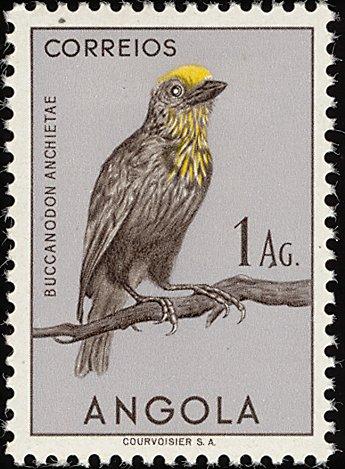 Angola 1951 Birds from Angola f.jpg