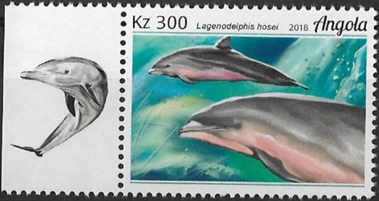 Angola 2018 Wildlife of Angola - Dolphins