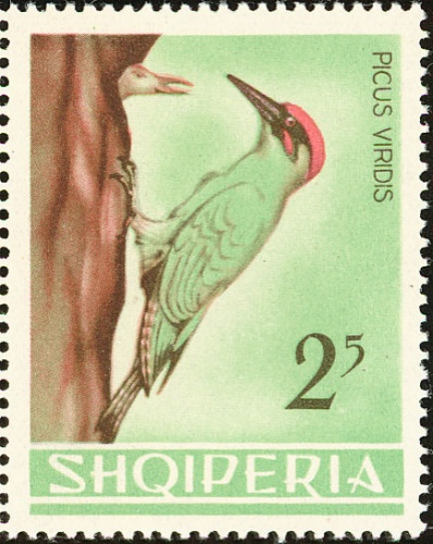 Albania 1964 Birds d.jpg