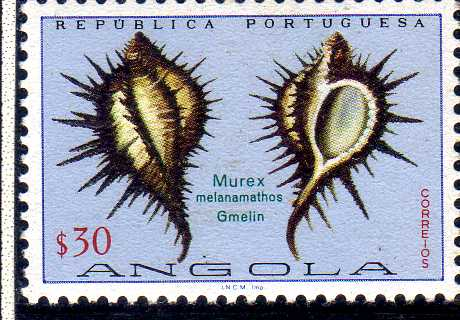 Angola 1974 Sea Shells b.jpg