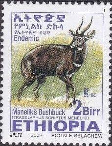 Ethiopia 2002 Menelik's Bushbuck u.jpg