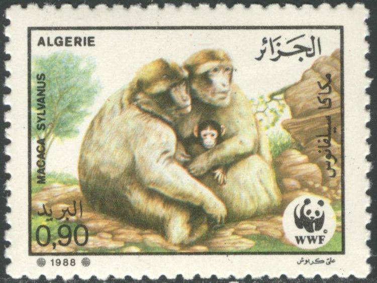 Algeria 1988 WWF - Barbary Macaque b.jpg