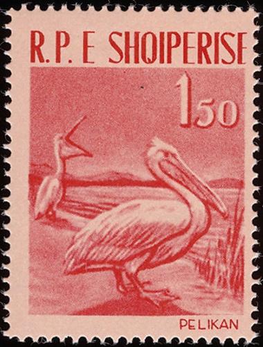 Albania 1961 Albanian Birds