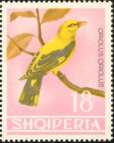 Albania 1964 Birds i.jpg