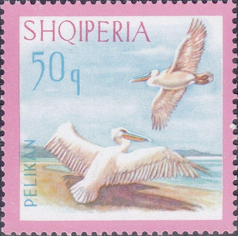 Albania 1967 Dalmatian Pelican e.jpg