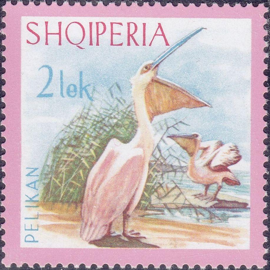Albania 1967 Dalmatian Pelican f.jpg