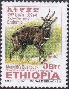 Ethiopia 2002 Menelik's Bushbuck w.jpg
