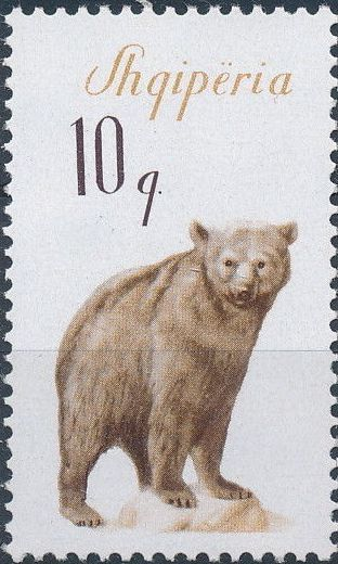 Albania 1965 Brown Bear
