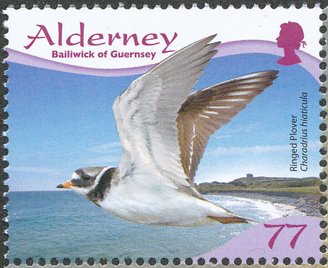 Alderney 2009 Resident Birds Part 4 (Waders) f.jpg
