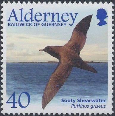 Alderney 2003 Migrating Birds Part 2 Seabirds d.jpg