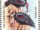 Swaziland 1984 WWF Southern Bald Ibis c.jpg