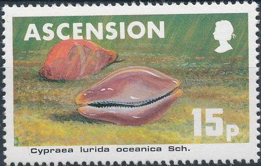 Ascension 1983 Sea Shells c.jpg
