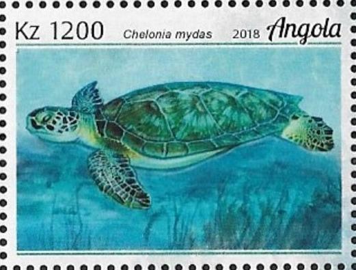 Angola 2018 Wildlife of Angola - Turtles e.jpg