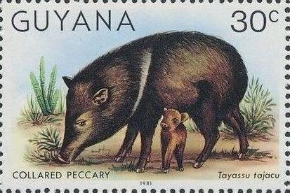 Guyana 1981 Wildlife f.jpg