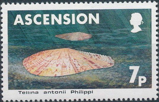 Ascension 1983 Sea Shells