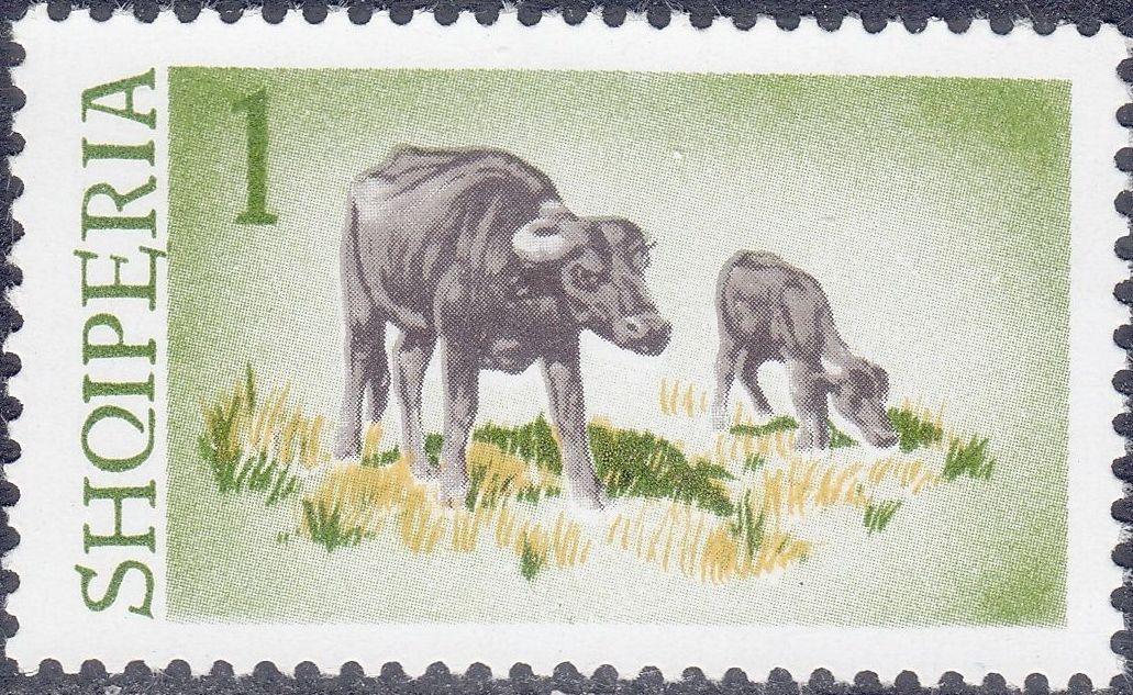Albania 1965 Water Buffalo