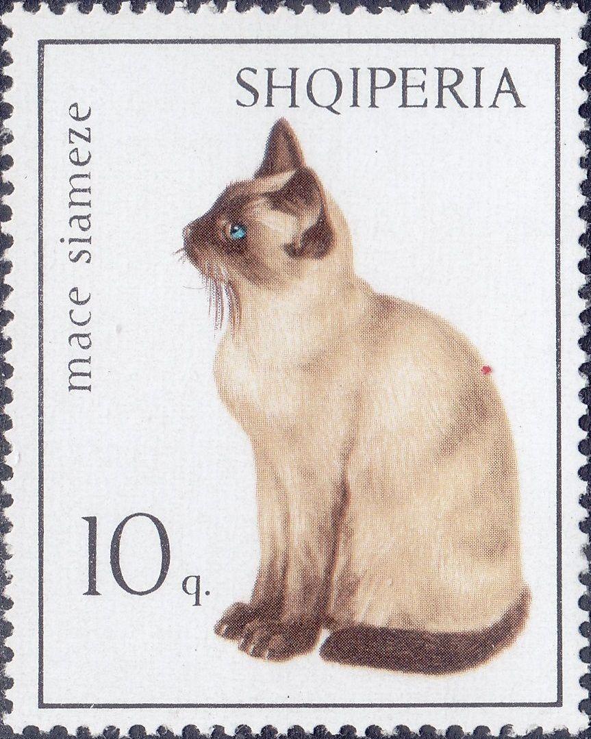 Albania 1966 Cats